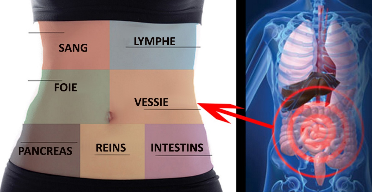 detox-organes